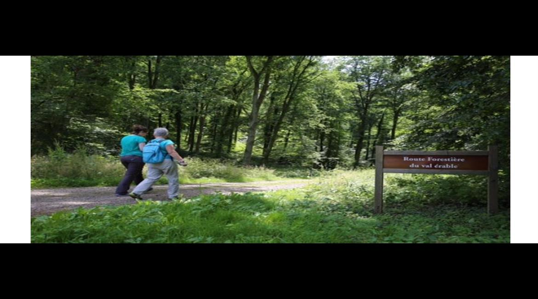 SEINE MARITIME : Les randonnées du pays de Bray
